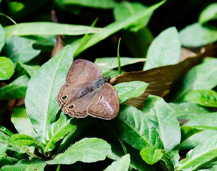 butterflies_TT006