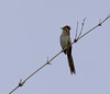 flycatcher or what_T002