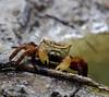 crab_TT073