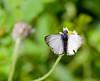 butterfly_T001
