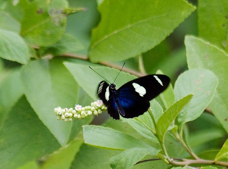 butterfly_TT074