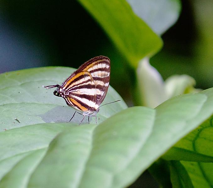 butterflies_TT005
