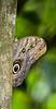 butterflies_TT004