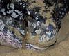 leatherbackturtle_eggylaying_maturabeach_TT003
