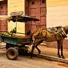 Horse pulling fruit