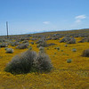 Near California Poppy Reserve, Lancaster
