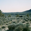 Wild borrows in the Mojave