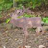wildlife   :-)