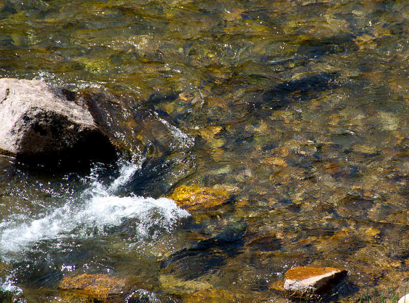 Salmon in the Salmon River.  These guys were huge.
