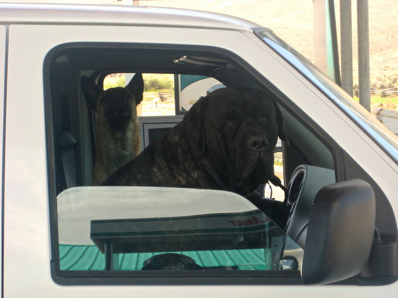 Dogs at a gas station, Challis Idaho