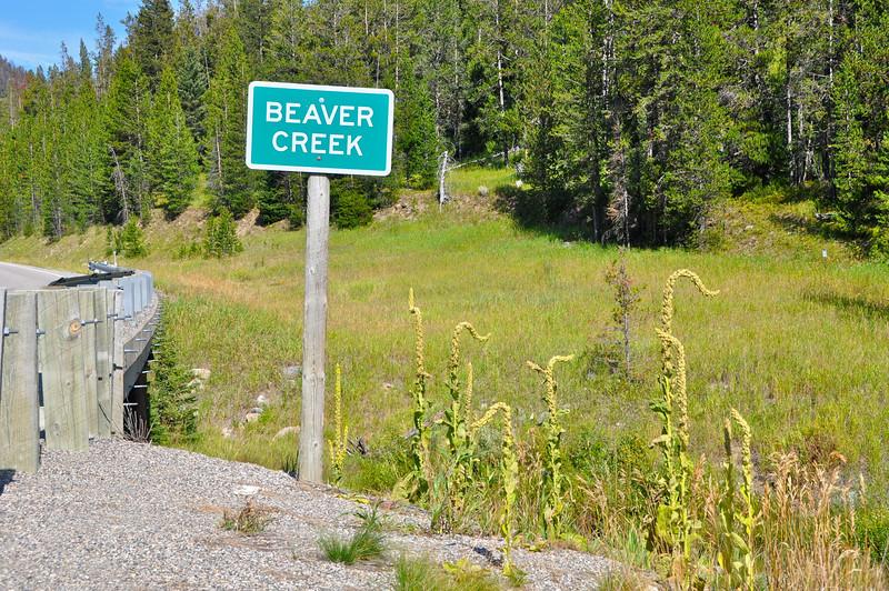 On the road between Hebgen Lake and Earthquake Lake, Montana.