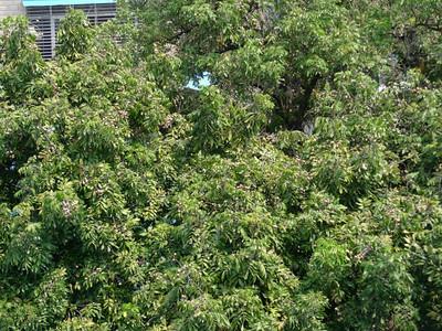Flora, Fauna & Fruit Trees
