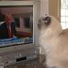Pasha likes watching t.v....or likes the cat on Donald's head...