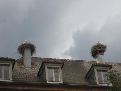 Same town, Storks nesting on virtually every Chimney