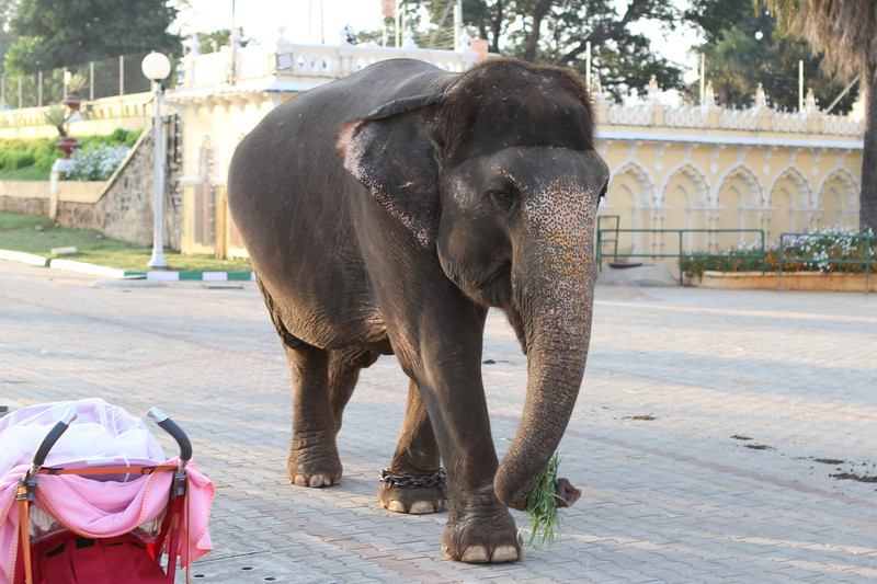 Elephant at Mysore Palace