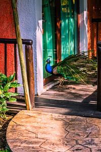 Cozumel, Mexico - Spring Break at Iberostar, 2013