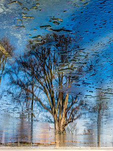Reflecting Pool Trees
