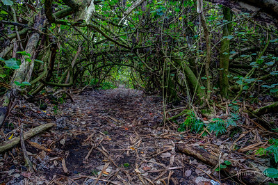 A dark, enchanted path through the jungle. Pahoa, Hawaii