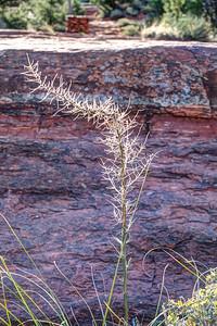 Bell Rock Trail. Sedona, Arizona