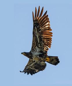 AK_Eagles-4