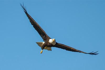 AK_Eagles-7