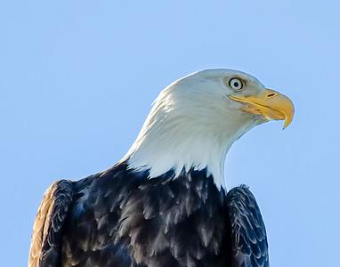 AK_Eagles-1