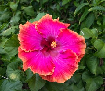 Kauai_Flowers-10