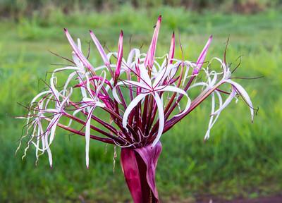 Kauai_Flowers-19