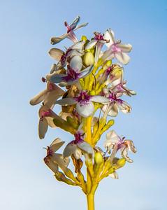 Kauai_Flowers-9
