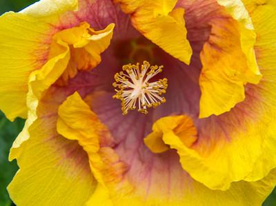Kauai_Flowers-14