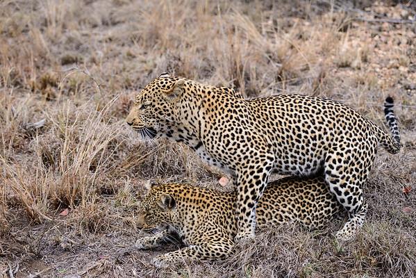 LeopardHills-20130825-0108