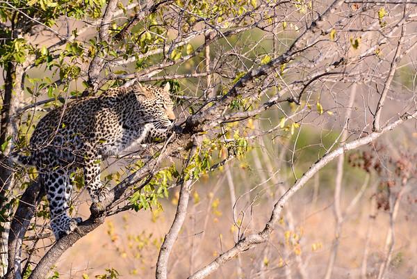 LeopardHills-20130827-2075