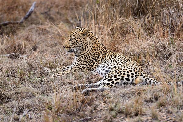 LeopardHills-20130825-0065
