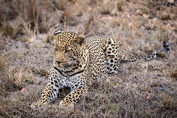 LeopardHills-20130825-0098