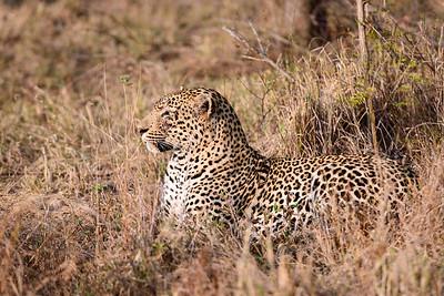 LeopardHills-20130826-1045