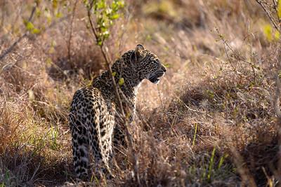 LeopardHills-20130827-2107
