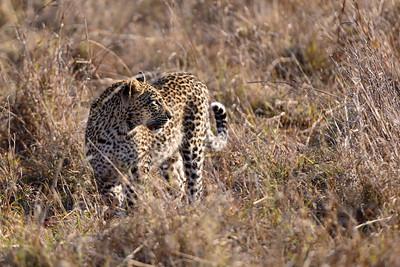 LeopardHills-20130827-2089