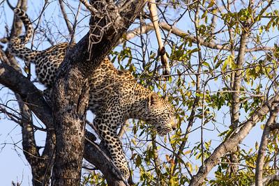 LeopardHills-20130827-2069
