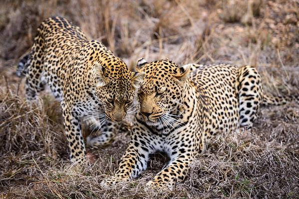 LeopardHills-20130825-0102