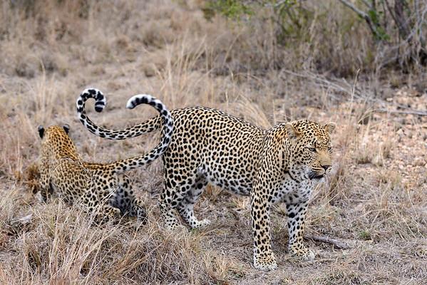 LeopardHills-20130825-0124