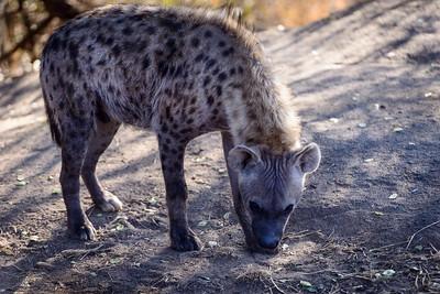 LeopardHills-20130828-3091