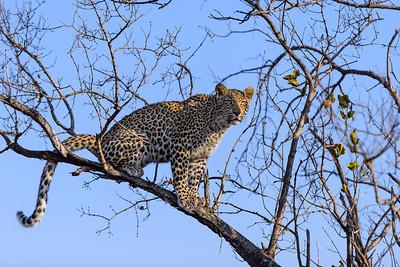 LeopardHills-20130827-2064