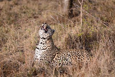 LeopardHills-20130826-1052