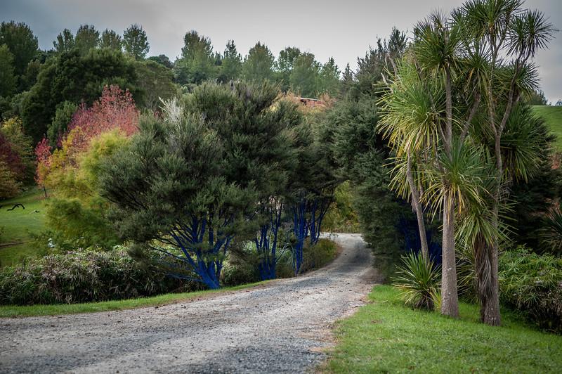 Auckland-20120501-430