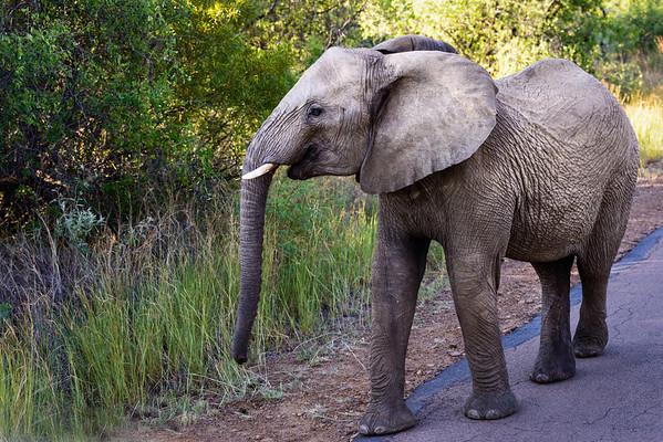 Pilanesberg-20130217-0665