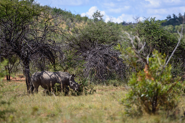 Pilanesberg-20130217-0599