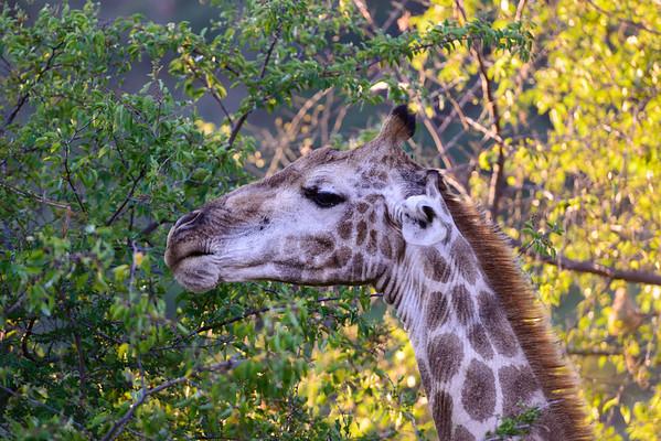 Pilanesberg-20130217-0722