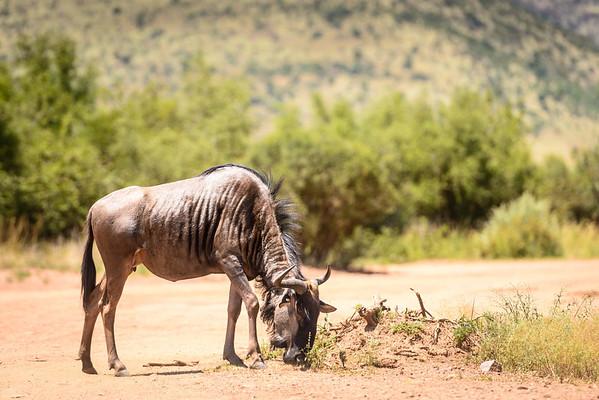 Pilanesberg-20130217-0255
