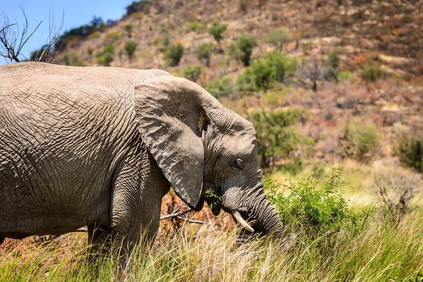 Pilanesberg-20130217-0496
