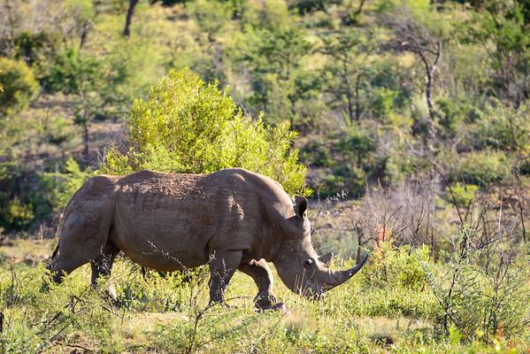 Pilanesberg-20130217-0654